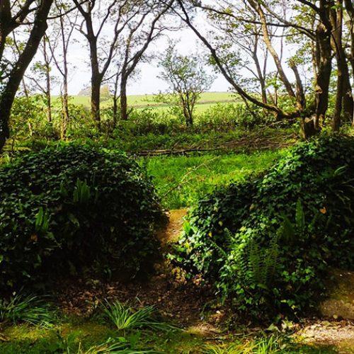 Heligan-Garden_Cornovaglia_foto-in-evidenza
